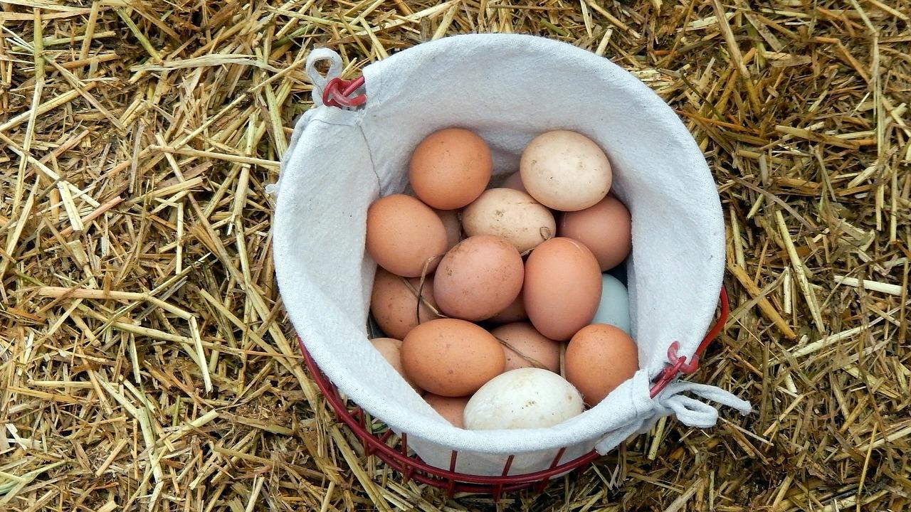Ovos da Nossa Quinta (1/2 dúzia)