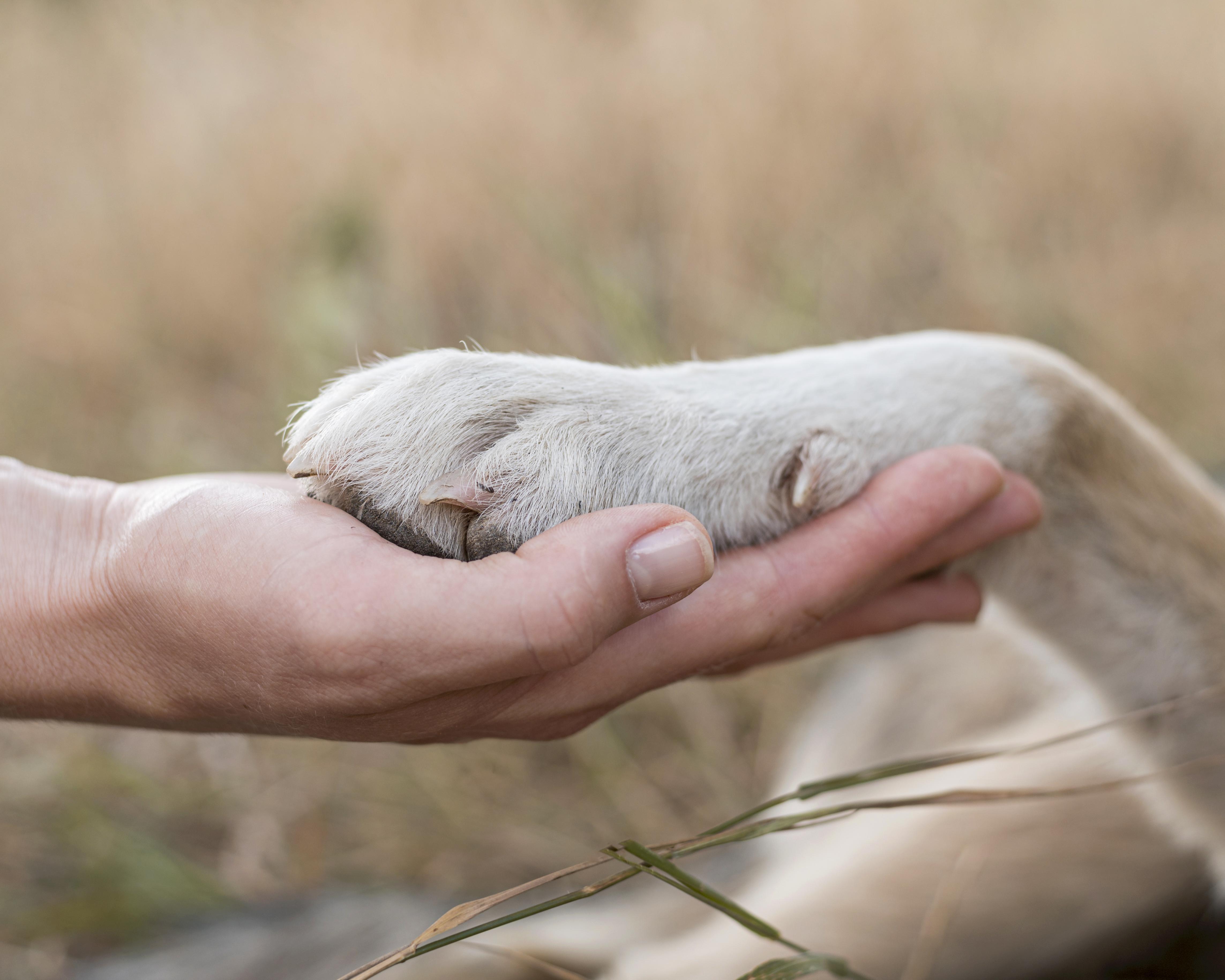 Así benefician las mascotas a la salud mental