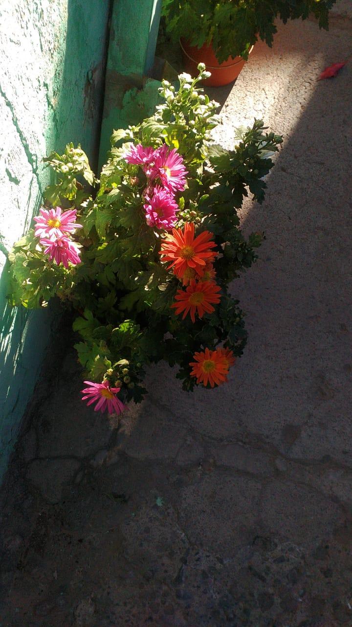 Plantas para Mamá