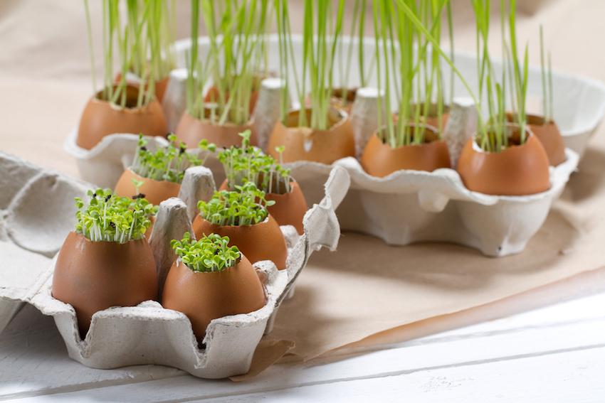 Cómo cultivar tus propias hierbas en la cocina