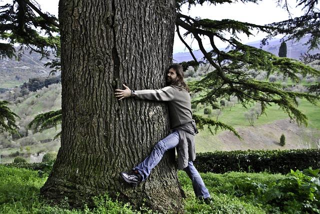 Los Beneficios de Abrazar un Arbol