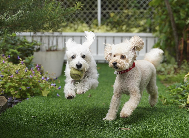 Ten tu propio jardín con pasto sintético