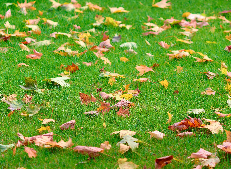 Lo que debes saber del césped sintético para jardín