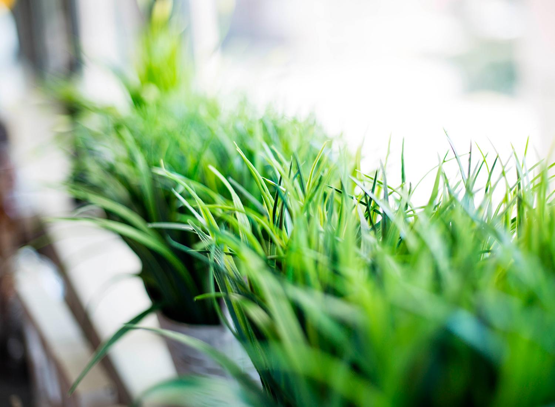 Economía y elegancia: el pasto artificial para jardín