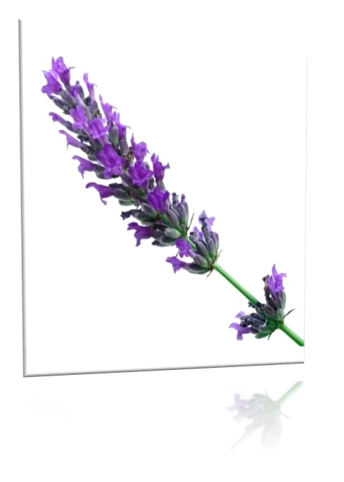 Aceite natural lavanda aromaterapia esencial relaja hidrata arrugas piel Chile