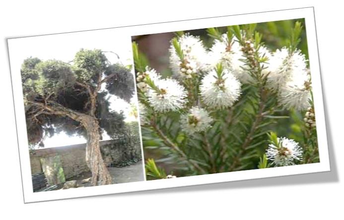 Limpiador Oriflame love nature purifying oily skin gel wash tea tree