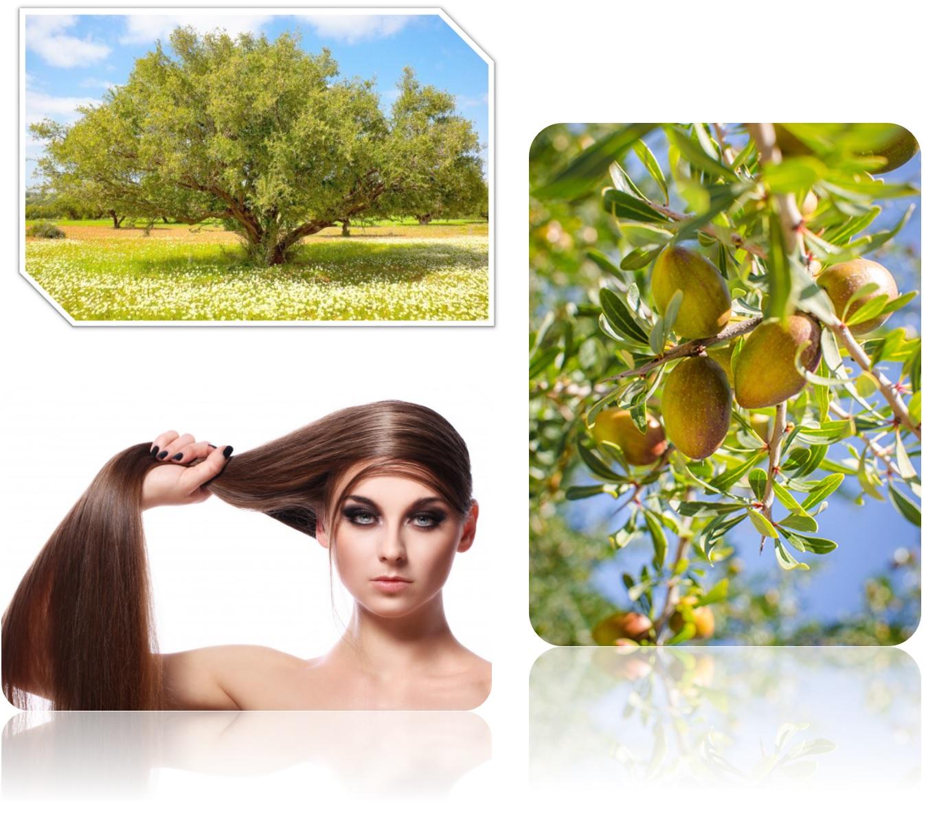 Shampoo argan oil marruecos champú aceite nutritivo natural