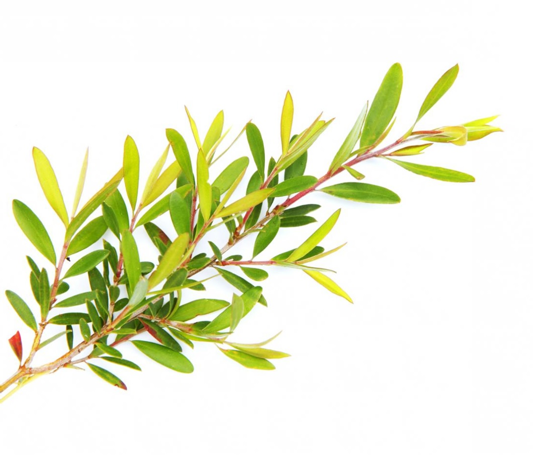 Loción + crema matificante piel grasa love nature tea tree oriflame