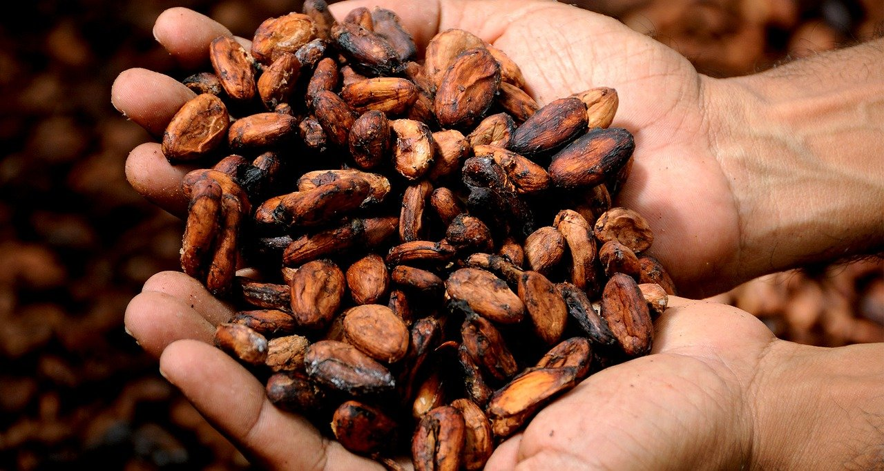 Beneficios del Cacao (Cocoa Powder)